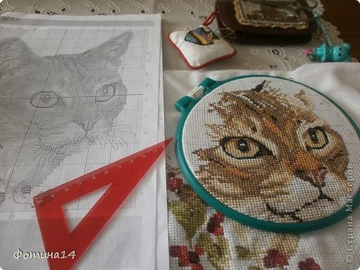 Хочу вышить три подушки с котами. Один скоро будет готов. фото 4