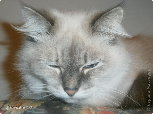 Хочу вышить три подушки с котами. Один скоро будет готов. фото 6