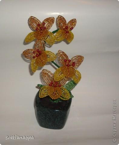 Орхидеи фото 2