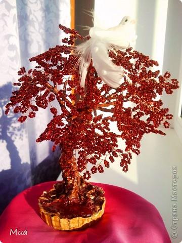 Лаванда и очередное деревце фото 2