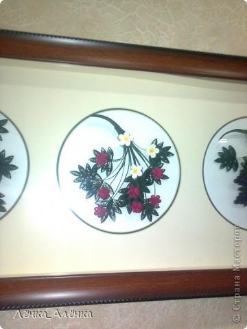 Мои ягодки украшают стену на кухне. фото 5