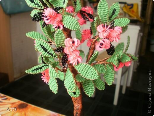 """""""Во весь рост"""" фотографии к сожалению нет, дерево уже подарено. фото 1"""