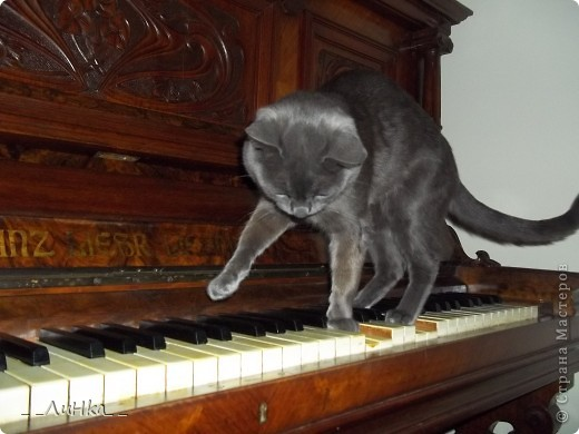 Сегодня я покажу вам чем обычно занимается мой котяра)))))))))) Он творческая личность))) как только я сажусь за пианино, он сразу прыгает ко мне на колени, слушает как я играю и даже старается вытеснить меня с моего места, чтобы самому поиграть..... Маэстро в деле.....)))))) фото 1