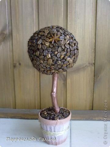 Кофейное дерево 3 фото 2