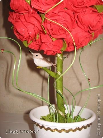Цветок страсти фото 2