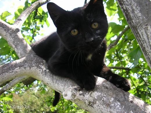 Милые мастерицы, захотелось мне рассказать о моем котике. Нет его больше... Но память осталась.  Так получилось, что в 27 лет я развелась. Муж был категорически против животных в доме, поэтому когда я осталась одна, я поняла, что очень хочу, чтоб меня дома кто-то ждал. Подруги предложили завести кота. Я согласилась. И вот однажды в апреле я встретилась с подругой в назначенное время в назначенном месте и получила от нее коробку с моим сокровищем.  Родился он в наркодиспансере у местной кошки. Отец неизвестен. Еще был братик. Его мы, кстати, тоже потом пристроили.  В общем, это первое фото моего Яши. Только приехали домой и открыла коробку. Вот он - моё чернобурое сокровище. Лежит в куске от свитера, на котором с мамой спал - решили, что так ему будет легче привыкать к новому месту. фото 4