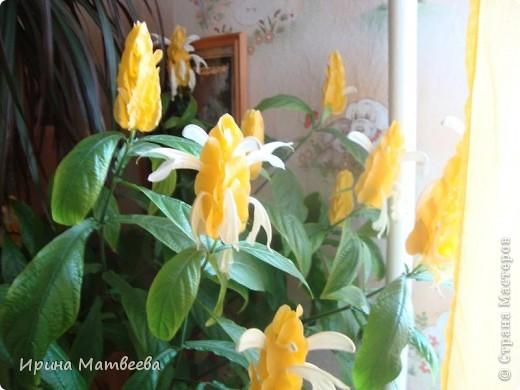 Цветы являются для меня важной частью жизни и творчества, а также интерьера. В квартире круглогодично живет множество цветов. Однако я хотела бы рассказать о герани (по научному - пеларгонии). Многие настороженно относятся к пеларгонии, поскольку считают, что она неприятно пахнет. Действительно, у ее листвы специфичный запах ,который может и не нравиться человеку. Однако, многим ее запах, обладающий полезными бактерицидными свойствами, нравится или по крайней мере, не вызывает раздражения. Главное знать, что у человека нет аллергии на этот запах или на цветы, нее ставить много гераней в детскую комнату. Что касается меня, мне повезло. Запах герани не тревожит ни меня, ни моих домочадцев. Мои цветы нравятся всей семье.   Герань начинает цвести в феврале - марте. За окном снег, а на окне горят цветы. Ждут, когда температура позволит перебраться им на лоджию.Она у меня  не утепленная, поэтому цветы там могут жить с апреля по  ноябрь.  фото 20