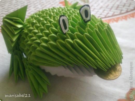 жабка фото 1
