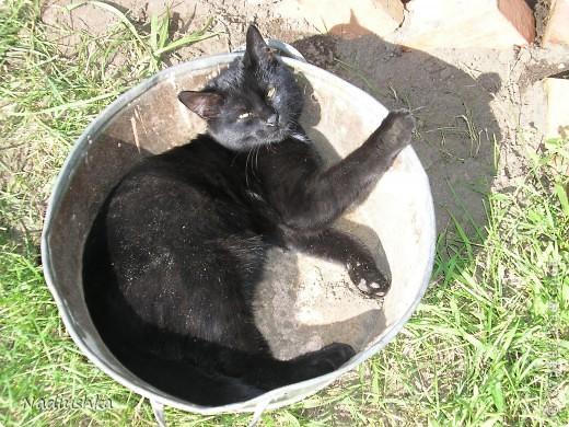 Милые мастерицы, захотелось мне рассказать о моем котике. Нет его больше... Но память осталась.  Так получилось, что в 27 лет я развелась. Муж был категорически против животных в доме, поэтому когда я осталась одна, я поняла, что очень хочу, чтоб меня дома кто-то ждал. Подруги предложили завести кота. Я согласилась. И вот однажды в апреле я встретилась с подругой в назначенное время в назначенном месте и получила от нее коробку с моим сокровищем.  Родился он в наркодиспансере у местной кошки. Отец неизвестен. Еще был братик. Его мы, кстати, тоже потом пристроили.  В общем, это первое фото моего Яши. Только приехали домой и открыла коробку. Вот он - моё чернобурое сокровище. Лежит в куске от свитера, на котором с мамой спал - решили, что так ему будет легче привыкать к новому месту. фото 6