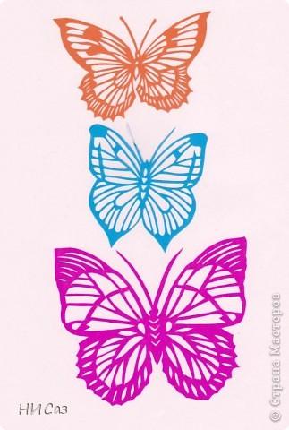 Вот и снова бабочки. фото 4
