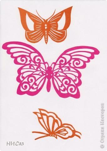 Вот и снова бабочки. фото 6