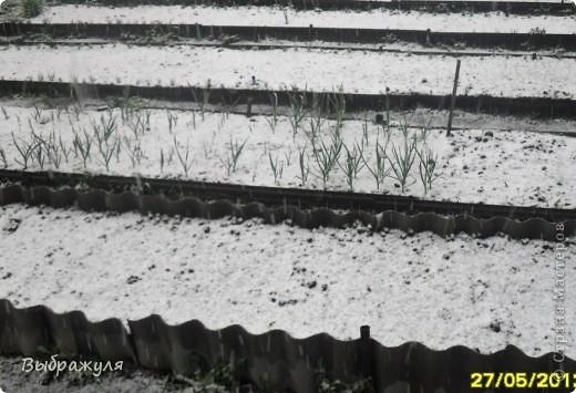 Чудеса природы да и только. Сегодня утром проснувшись на даче увидели что снег просто валит. Нет он не идёт , а ва-ли-т. Это вид из окна. фото 2