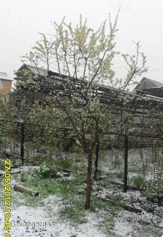 Чудеса природы да и только. Сегодня утром проснувшись на даче увидели что снег просто валит. Нет он не идёт , а ва-ли-т. Это вид из окна. фото 5