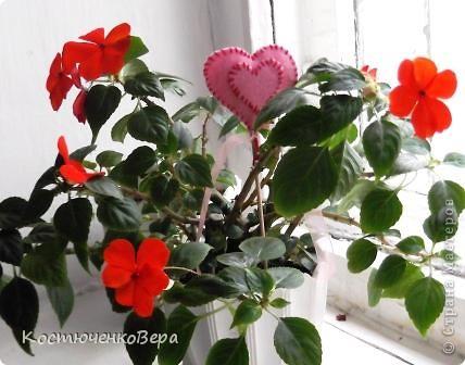 На мамином окне буйствует глоксининия. Это любимые цветы моей мамы. День солнечный, поэтому окно мама прикрывает газетой. У нас мало места для цветов, но некоторые надолго задерживаются. Сколько себя помню, эти цветы были всегда, сорта, правда менялись фото 8