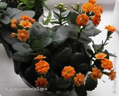 На мамином окне буйствует глоксининия. Это любимые цветы моей мамы. День солнечный, поэтому окно мама прикрывает газетой. У нас мало места для цветов, но некоторые надолго задерживаются. Сколько себя помню, эти цветы были всегда, сорта, правда менялись фото 9