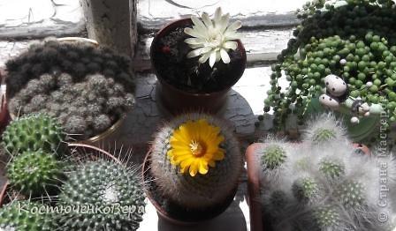 На мамином окне буйствует глоксининия. Это любимые цветы моей мамы. День солнечный, поэтому окно мама прикрывает газетой. У нас мало места для цветов, но некоторые надолго задерживаются. Сколько себя помню, эти цветы были всегда, сорта, правда менялись фото 3
