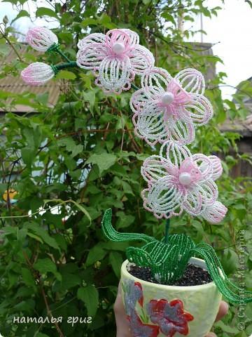 моя долгожданная орхидея.сделала в подарок для своей напарнице. фото 1