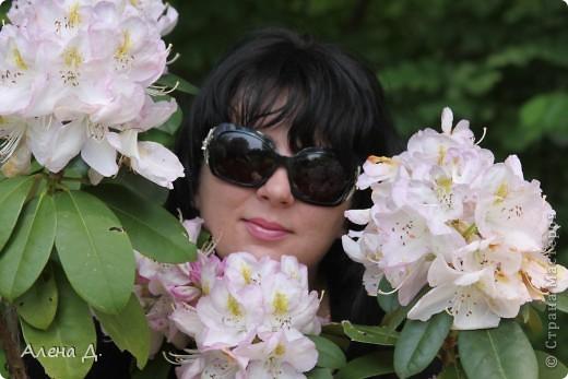 Приветик девочки! Вчера ездили с мужем в сады Дюпона! Нам очень понравилось! Немного пофоткала, приглашаю и ВАС посмотреть немного фотографий. фото 3