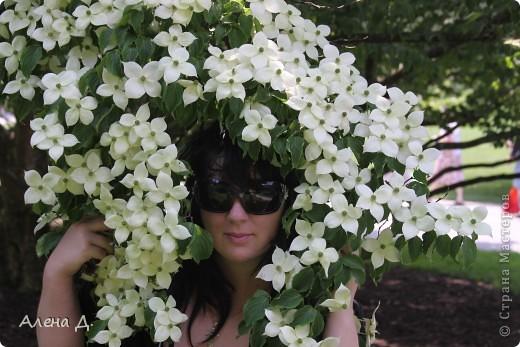 Приветик девочки! Вчера ездили с мужем в сады Дюпона! Нам очень понравилось! Немного пофоткала, приглашаю и ВАС посмотреть немного фотографий. фото 19