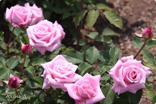 Приветик девочки! Вчера ездили с мужем в сады Дюпона! Нам очень понравилось! Немного пофоткала, приглашаю и ВАС посмотреть немного фотографий. фото 21