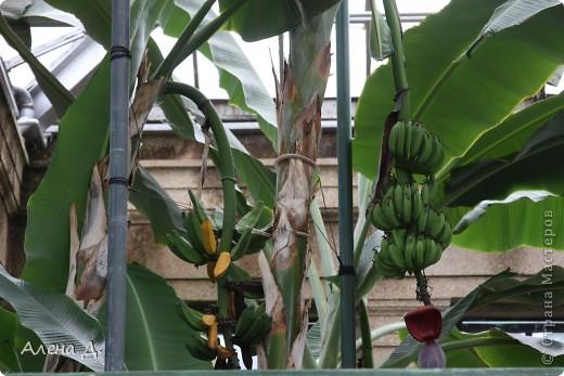 Приветик девочки! Вчера ездили с мужем в сады Дюпона! Нам очень понравилось! Немного пофоткала, приглашаю и ВАС посмотреть немного фотографий. фото 64