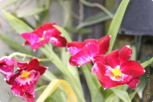Приветик девочки! Вчера ездили с мужем в сады Дюпона! Нам очень понравилось! Немного пофоткала, приглашаю и ВАС посмотреть немного фотографий. фото 66