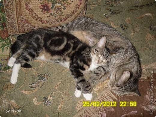 Добрый день, дорогие мастерицы! как говорится, кому что - а мне котов побольше для счастья. сотворился у меня вот такой зверюка. фото 7