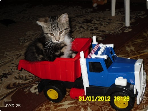 Добрый день, дорогие мастерицы! как говорится, кому что - а мне котов побольше для счастья. сотворился у меня вот такой зверюка. фото 5