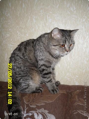 Добрый день, дорогие мастерицы! как говорится, кому что - а мне котов побольше для счастья. сотворился у меня вот такой зверюка. фото 3