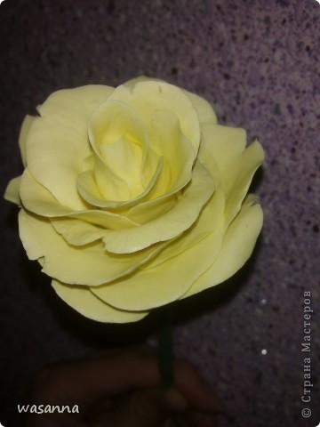 Первая большая роза фото 1