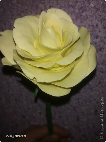 Первая большая роза фото 2