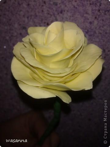 Первая большая роза фото 3
