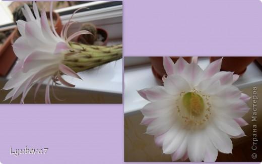 Всем привет!!! В продолжение цветочной темы (http://stranamasterov.ru/node/312886, http://stranamasterov.ru/node/314823), сплела сиреневую шкатулку в подарок.  фото 5
