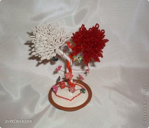 Хочу показать подборку разных деревьев ко Дню Влюбленных. фото 14