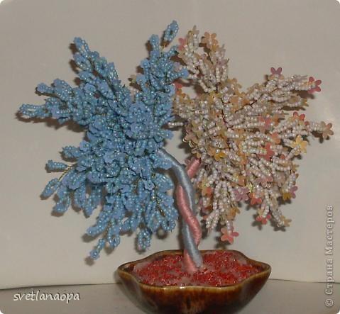 Хочу показать подборку разных деревьев ко Дню Влюбленных. фото 10