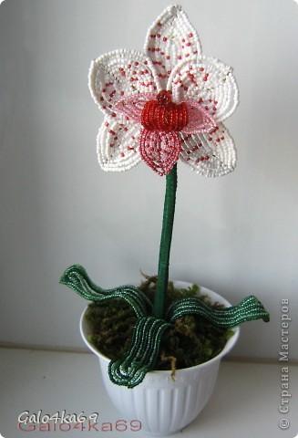 Орхидею делала по орхидее Татьяны  http://stranamasterov.ru/node/167600?c=favorite,  спасибо ей большое за схемку( фото с описанием из журнала) ,очень она у нее мне понравилась, как настоящая и я решила сделать такую же, но пока мини, и чтобы всем стало достуно, решила сделать по описанию МК .  Для изготовления цветка нам понадобится бисер: белый- 20гр. бордовый- 5 гр. розовый -10 гр. алый – 5 гр.  фото 1