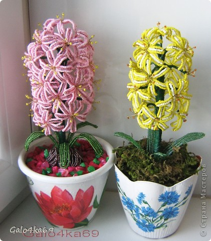 Желтый гиацинт состоит из 17 цветков фото 2