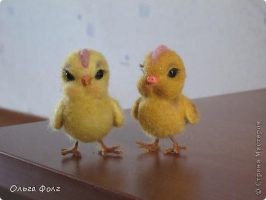 Цыплята фото 2