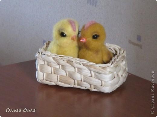Цыплята фото 1