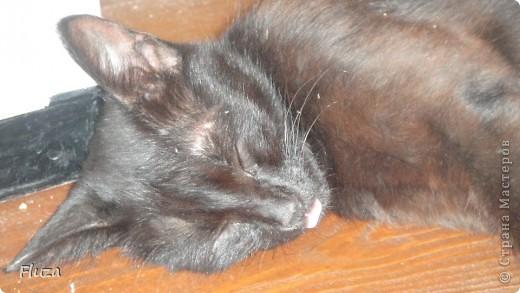 Хочу рассказать Вам   про наших кошек.  История первая про кошку МАШКУ.      На производственной базе  в 2009 году нас атаковали мыши, т.к. с лева РайПО с права макаронный цех. Срочно завели котят сразу трех штук: белый, серый и черный. Один попал под машину, другой пропал,  остался один как вы думаете какой? Конечно черный и оказалась девочкой- назвали МАШКОЙ.      Когда она стала невестой к ней в женихи пришел кот весь в черном с белым галстуком и и белой кляксой на носу. Сколько уж ему было лет не понятно, но большой и как оказалось очень умный. Мы его оставили жить вместе с Машкой и назвали Васькой. Он быстро освоился привык к своему имени и стал заботливым, любящим мужем. Какая это бала любовь…Он так любил Машку, постоянно, целовал, ласкался, а Машка только подставляла, то мордочку, то лобик или залазила на него спать. На пару таскали то мышей,  то крыс, больше Машка старалась. Смотрим Машка орет и тащит огромную крысу, таким образом она постоянно сообщает, что несет гостинец.. Весной, Васька очень долго ухаживал за ней, долго уговаривал, гонял ее по всей базе. Но та никак не уступала, кое как через неделю или две зажал все же на крыше. Мы, стали ждать прибавления. Как то приблудилась кошка с котенком такая разноцветная, пушистая и котенок такой же. Я думаю зачем столько кошек? Ну и говорю Ваське: «Гони давай ее отсюда», он посмотрел на меня умным взглядом и пошел на нее  со злобным видом, та ушла оставив нам котенка. Васька не стал кошечку трогать (бабник), но она все равно куда-то пропала.      Через некоторое время родились 3 котенка все черные как мама с папой. Машка как хорошая мать кормила, таскала мышей, крыс, а Васька вообще обленился стал поджидать когда Машка с добычей придет. Бедная Машка исхудала- это ж надо четверых кормить, а еще эти как пиявки никак не перестают сосать.   фото 1