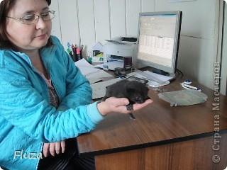 Хочу рассказать Вам   про наших кошек.  История первая про кошку МАШКУ.      На производственной базе  в 2009 году нас атаковали мыши, т.к. с лева РайПО с права макаронный цех. Срочно завели котят сразу трех штук: белый, серый и черный. Один попал под машину, другой пропал,  остался один как вы думаете какой? Конечно черный и оказалась девочкой- назвали МАШКОЙ.      Когда она стала невестой к ней в женихи пришел кот весь в черном с белым галстуком и и белой кляксой на носу. Сколько уж ему было лет не понятно, но большой и как оказалось очень умный. Мы его оставили жить вместе с Машкой и назвали Васькой. Он быстро освоился привык к своему имени и стал заботливым, любящим мужем. Какая это бала любовь…Он так любил Машку, постоянно, целовал, ласкался, а Машка только подставляла, то мордочку, то лобик или залазила на него спать. На пару таскали то мышей,  то крыс, больше Машка старалась. Смотрим Машка орет и тащит огромную крысу, таким образом она постоянно сообщает, что несет гостинец.. Весной, Васька очень долго ухаживал за ней, долго уговаривал, гонял ее по всей базе. Но та никак не уступала, кое как через неделю или две зажал все же на крыше. Мы, стали ждать прибавления. Как то приблудилась кошка с котенком такая разноцветная, пушистая и котенок такой же. Я думаю зачем столько кошек? Ну и говорю Ваське: «Гони давай ее отсюда», он посмотрел на меня умным взглядом и пошел на нее  со злобным видом, та ушла оставив нам котенка. Васька не стал кошечку трогать (бабник), но она все равно куда-то пропала.      Через некоторое время родились 3 котенка все черные как мама с папой. Машка как хорошая мать кормила, таскала мышей, крыс, а Васька вообще обленился стал поджидать когда Машка с добычей придет. Бедная Машка исхудала- это ж надо четверых кормить, а еще эти как пиявки никак не перестают сосать.   фото 6