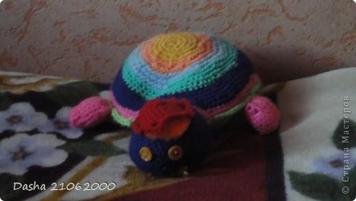 Черепашка по имени Наташка