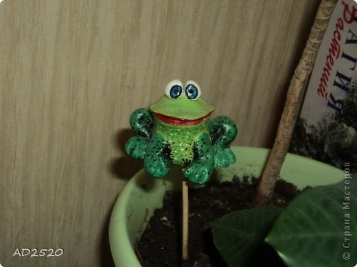 Лягушонка фото 1