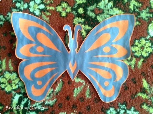 Бабочки фото 5