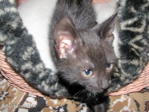 на домик приклеили котят, пошитых из квадрата ткани, эту идею слямзила у Трофимовой Елены фото 5