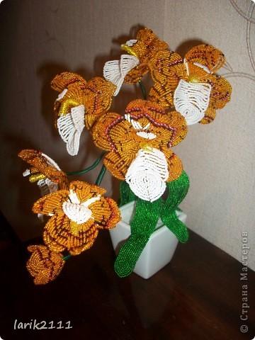 """Орхидея """"Золотая"""""""