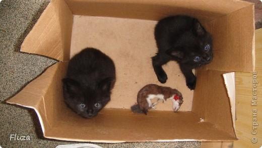 Хочу рассказать Вам   про наших кошек.  История первая про кошку МАШКУ.      На производственной базе  в 2009 году нас атаковали мыши, т.к. с лева РайПО с права макаронный цех. Срочно завели котят сразу трех штук: белый, серый и черный. Один попал под машину, другой пропал,  остался один как вы думаете какой? Конечно черный и оказалась девочкой- назвали МАШКОЙ.      Когда она стала невестой к ней в женихи пришел кот весь в черном с белым галстуком и и белой кляксой на носу. Сколько уж ему было лет не понятно, но большой и как оказалось очень умный. Мы его оставили жить вместе с Машкой и назвали Васькой. Он быстро освоился привык к своему имени и стал заботливым, любящим мужем. Какая это бала любовь…Он так любил Машку, постоянно, целовал, ласкался, а Машка только подставляла, то мордочку, то лобик или залазила на него спать. На пару таскали то мышей,  то крыс, больше Машка старалась. Смотрим Машка орет и тащит огромную крысу, таким образом она постоянно сообщает, что несет гостинец.. Весной, Васька очень долго ухаживал за ней, долго уговаривал, гонял ее по всей базе. Но та никак не уступала, кое как через неделю или две зажал все же на крыше. Мы, стали ждать прибавления. Как то приблудилась кошка с котенком такая разноцветная, пушистая и котенок такой же. Я думаю зачем столько кошек? Ну и говорю Ваське: «Гони давай ее отсюда», он посмотрел на меня умным взглядом и пошел на нее  со злобным видом, та ушла оставив нам котенка. Васька не стал кошечку трогать (бабник), но она все равно куда-то пропала.      Через некоторое время родились 3 котенка все черные как мама с папой. Машка как хорошая мать кормила, таскала мышей, крыс, а Васька вообще обленился стал поджидать когда Машка с добычей придет. Бедная Машка исхудала- это ж надо четверых кормить, а еще эти как пиявки никак не перестают сосать.   фото 8