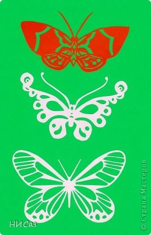 Вот и снова бабочки. фото 10