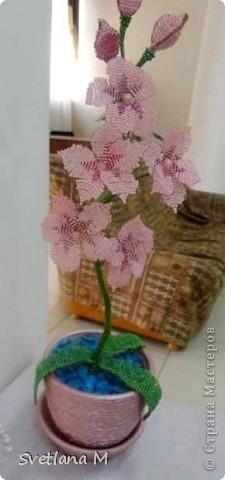 Наконец!!!Закончена орхидея,успели к концу учебого года!!! Орхидею сделала Роза Б.,7кл,занимается  в объединении 1 год!!! фото 1