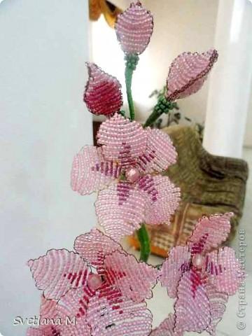 Наконец!!!Закончена орхидея,успели к концу учебого года!!! Орхидею сделала Роза Б.,7кл,занимается  в объединении 1 год!!! фото 3